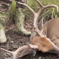 A Florida Trifecta Deer & Deer Hunting TV